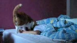Cat Wake up call