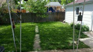 Dog Training Camp, backyard view