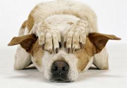 Feaful Dog